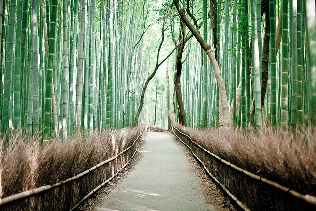 studiereis.Japan.18